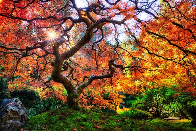 самые красивые деревья мира фото 2
