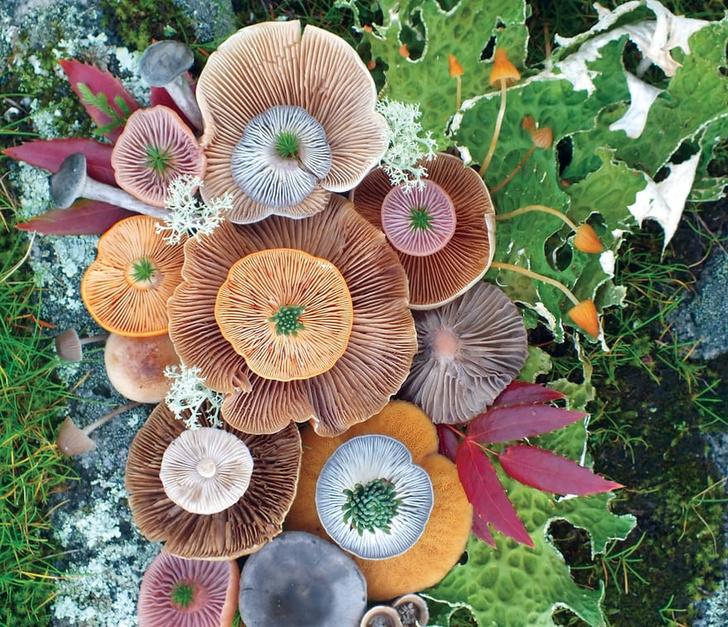 Волшебные грибы: Лесные фантазии американской художницы фото [3]