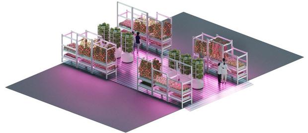RHS Chelsea Flower Show 2019: сад будущего Тома Диксона и ИКЕА (фото 5)