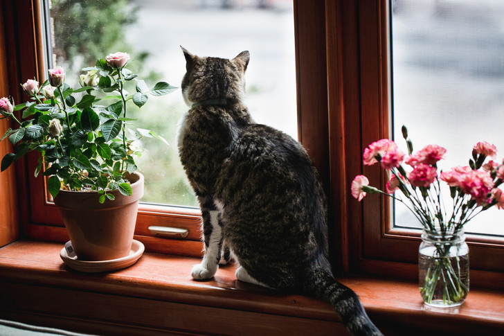 Растения и кошки: 7 правил выживания (фото 3)