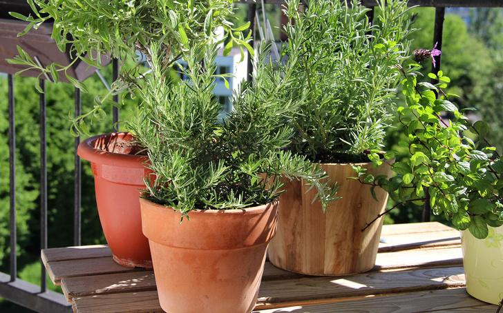 5 лучших растений для выращивания на балконе (фото 16)