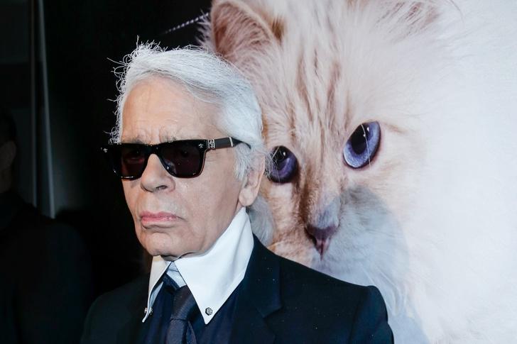 я вам пишу: брижит бардо написала письмо кошке карла лагерфельда