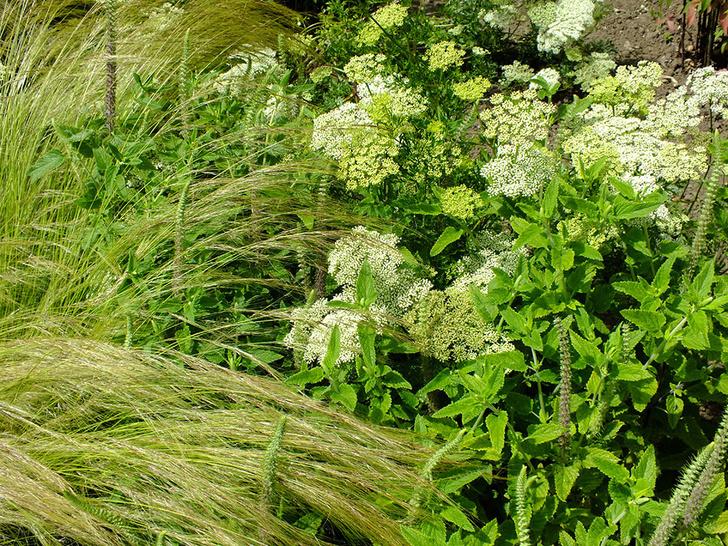 10 самых модных растений для сада (фото 24)