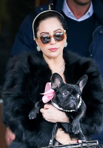 Леди Гага с питомцем
