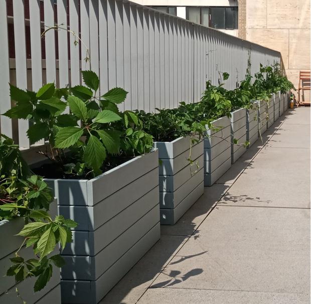 Готовые решения для озеленения балконов и террас (фото 3)