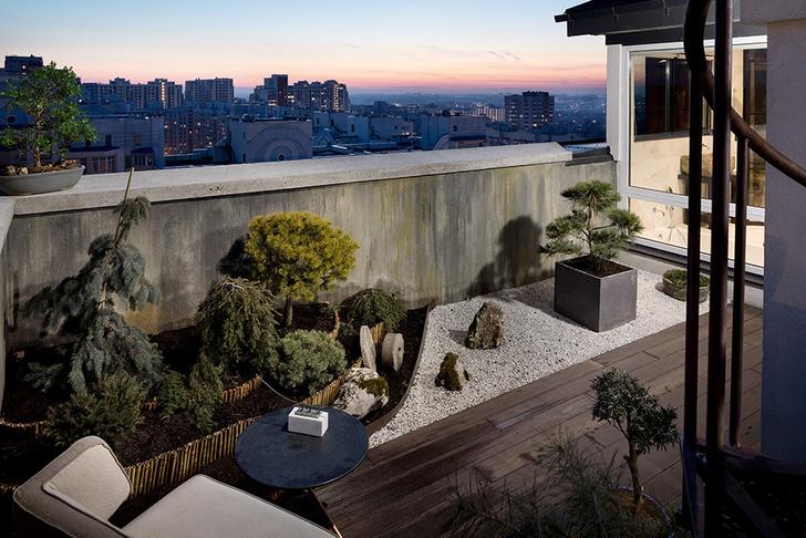 японский сад с хвойными деревьями бонсай