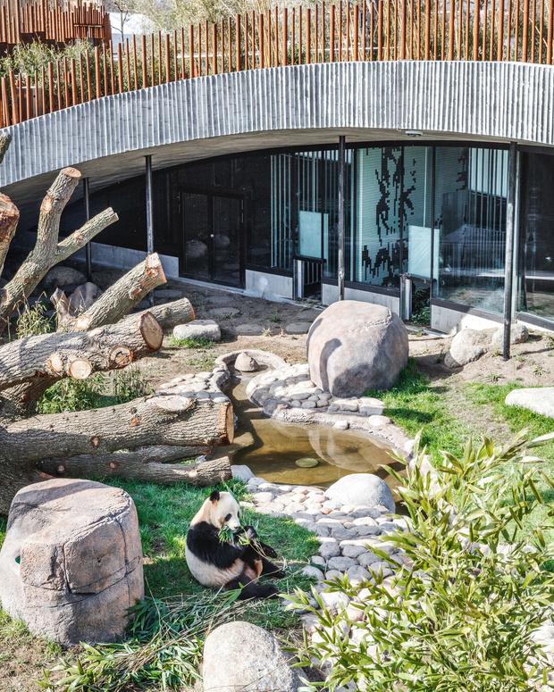 В зоопарке Копенгагена построили дом для панд (фото 2)