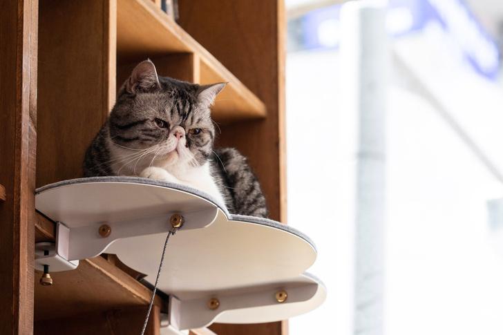 Топ-25: дизайнерские предметы для животных (фото 21)