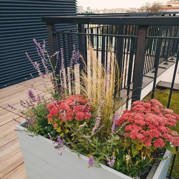 Готовые решения для озеленения балконов и террас (фото 1)