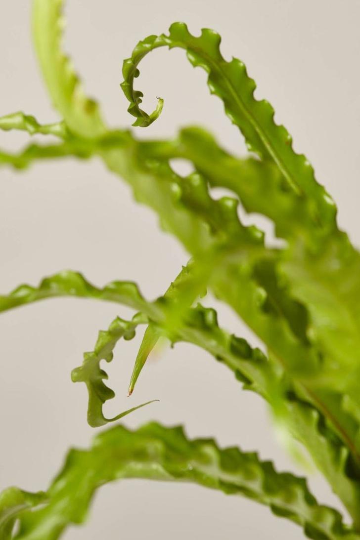 Висячие сады: 10 неприхотливых подвесных растений (фото 1)