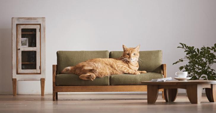 Топ-13: дизайнерские предметы для животных (фото 2)