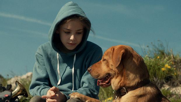 Самые трогательные фильмы о животных (фото 1)