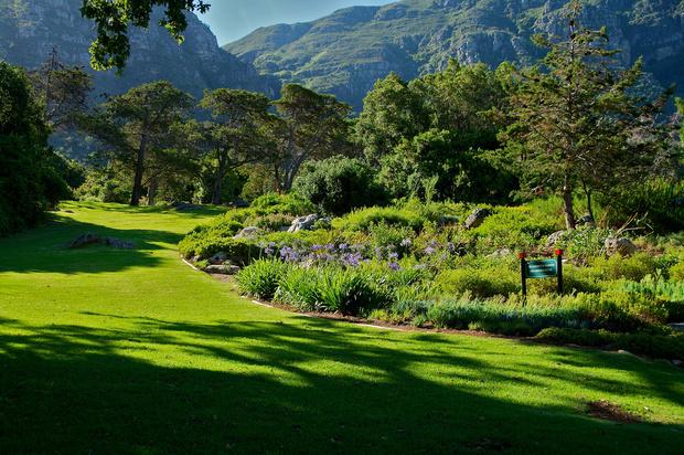 В Африку гулять: 10 причин поехать в Кейптаун (фото 29)