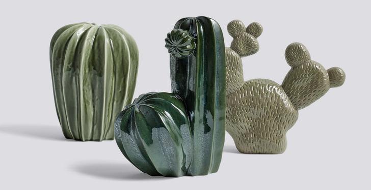 Колючий тренд: кактус и компания