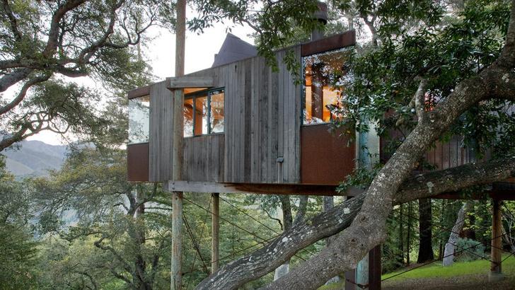 Экотренд: отели на деревьях (фото 6)