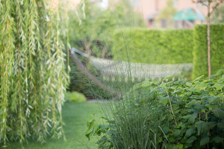 10 самых модных растений для сада (фото 35)