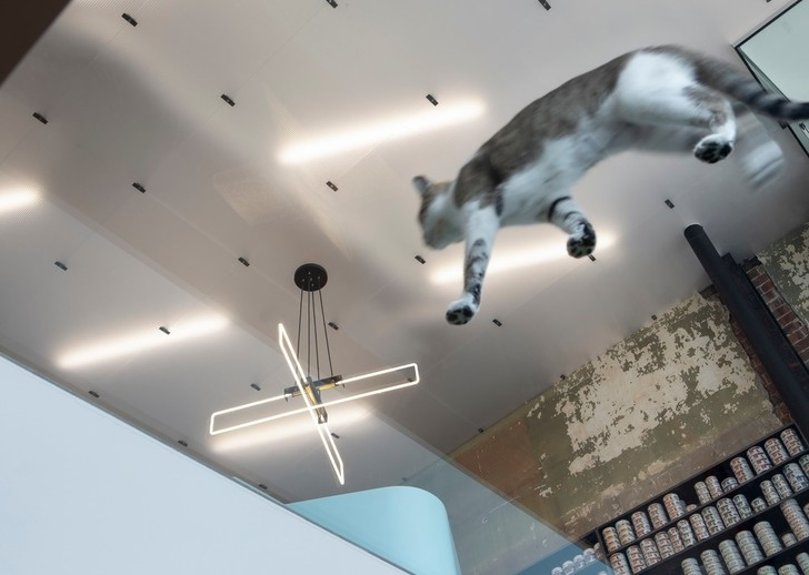 Дай лапу: ветеринарная клиника в Монреале (фото 3)