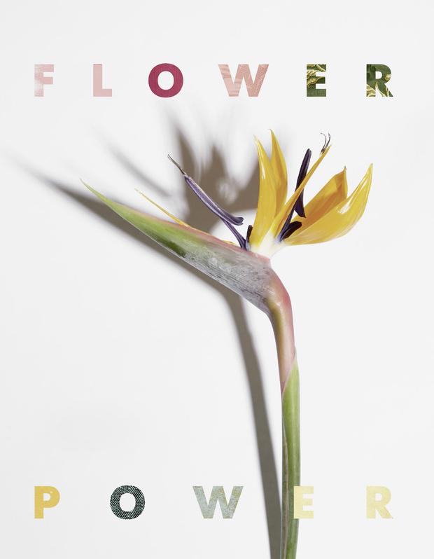 Flower Power: (фото 0)