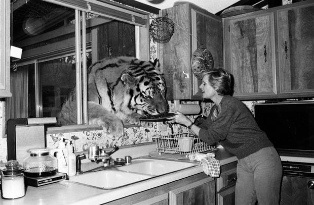 «Я выросла в окружении 60 кошек и 14 тигров и львов, которые живут в доме у моей бабушки»: неожиданное признание Дакоты Джонсон (фото 4)