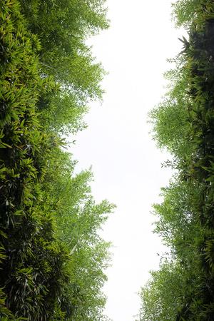 Самый большой в мире зеленый лабиринт: фото (фото 5.1)