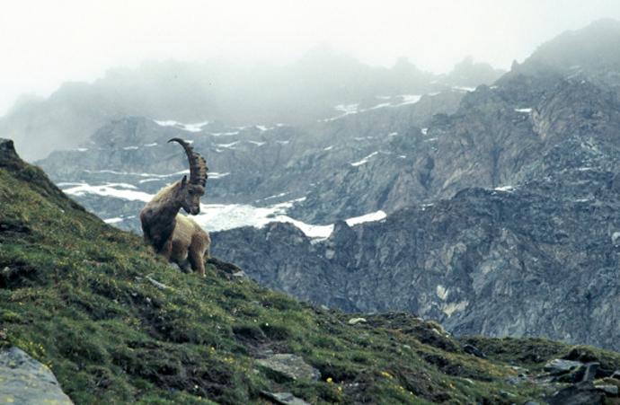 Итальянские Альпы: 10 главных достопримечательностей долины Аосты | галерея [8] фото [1]