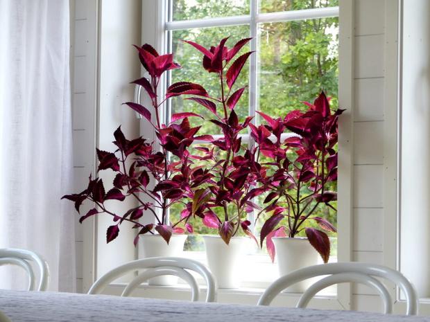 Самые модные комнатные растения этой осени (фото 10)