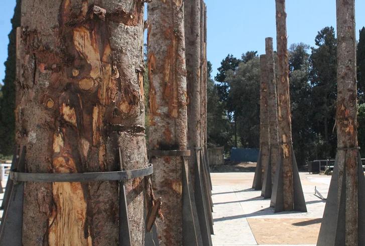«Мертвый лес» Стефано Боэри в Сиракузах (фото 8)