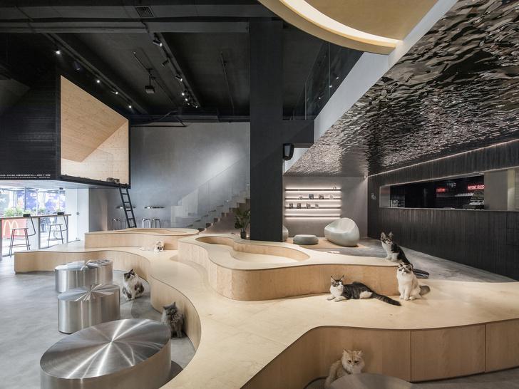 Скажи «мяу»: новое котокафе в Китае (фото 5)