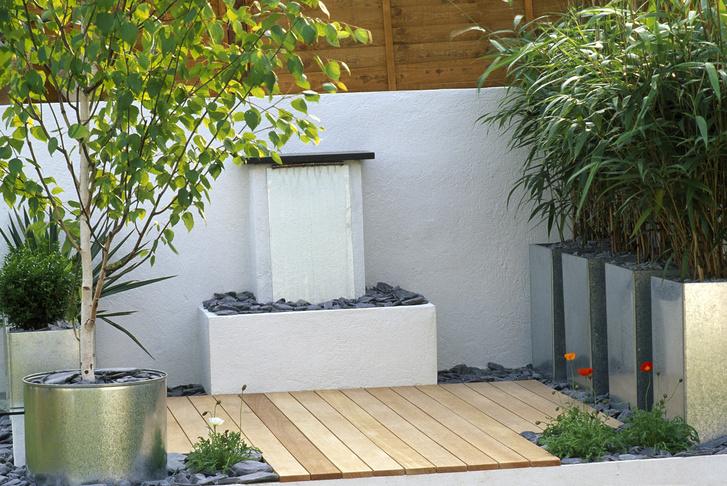 Что сажать на балконе: советы профессионала (фото 14)