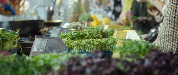 RHS Chelsea Flower Show 2019: сад будущего Тома Диксона и ИКЕА (фото 2)