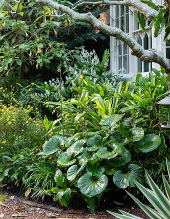 Дом и сад Бронте в центре Сиднея (фото 6.2)