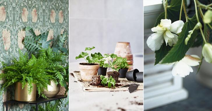 Самые модные комнатные растения 2019 года (фото 1)