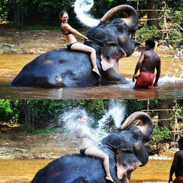Мечтаешь о душе в знойное лето? Нужен всего лишь один слон) водная стихия в природном балансе. #hansgrohe_конкурс #воднаястихия #shower