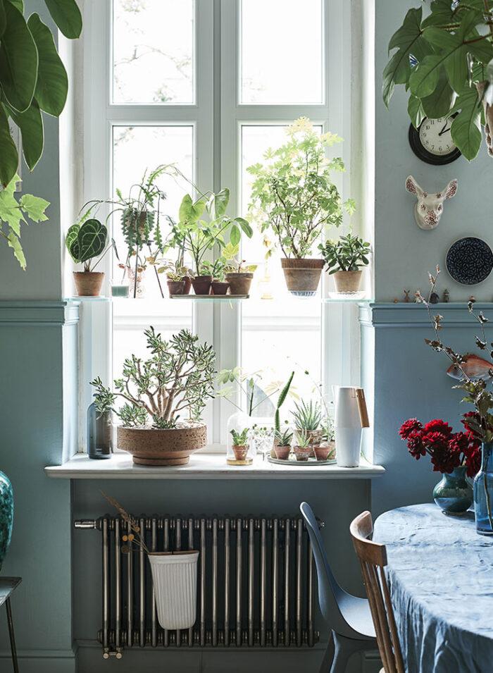 Заводим новое растение в доме: 11 советов (фото 3)