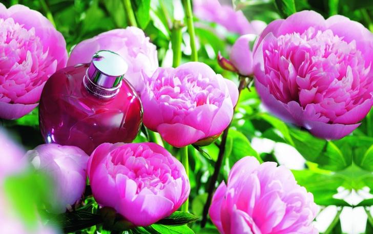 цветочек аленький: l`Occitane представил новую коллекцию