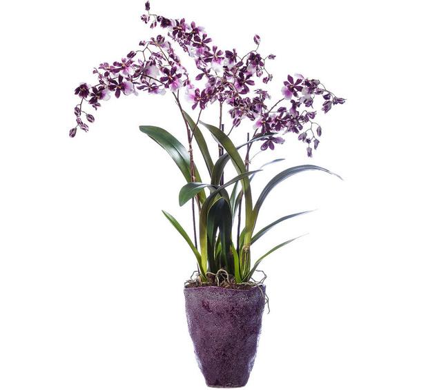 Ботанические копии от компании Treez