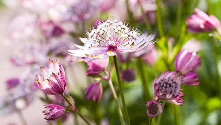 Модный сад круглый год: советы экспертов (фото 23)