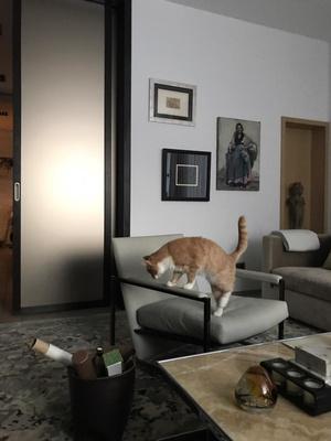 Квартира 85 м² для любительницы искусства и двух котят (фото 20.2)