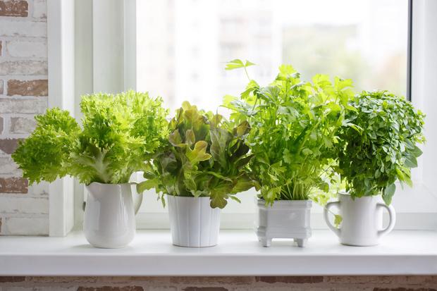Огород на кухне: растим салатные травы красиво (фото 0)