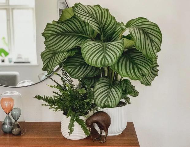 Самые модные комнатные растения этой осени (фото 7)