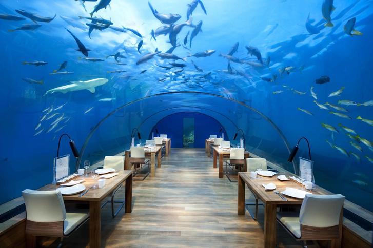 Полное погружение: топ-10 лучших подводных ресторанов (фото 9)