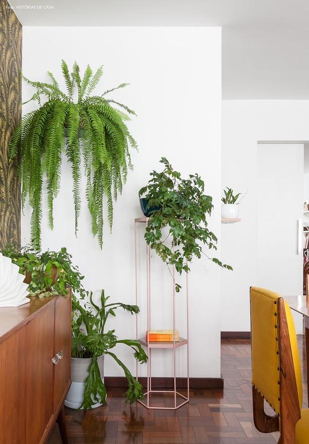 Растения в интерьере: советы дизайнера Ильи Гульянца (фото 21)