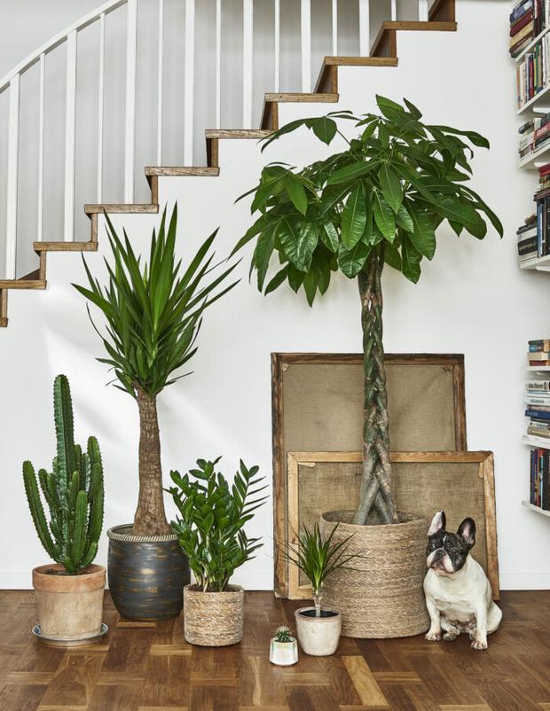 Новое растение в доме: 11 советов (фото 9)