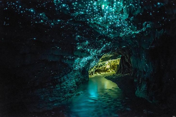 Пещера светлячков, Новая Зеландия