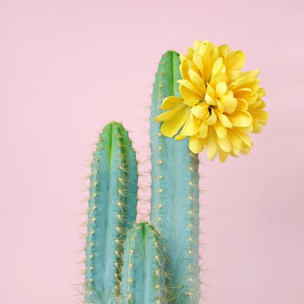 Я уколов не боюсь: косметика с экстрактом кактуса (фото 12)