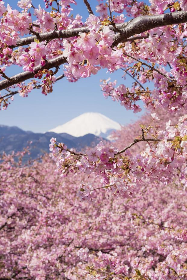 Записки у изголовья: гид по Японии (фото 2)