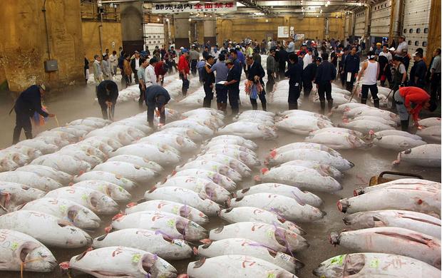 Рыбный рынок Цукидзи, Токио, Япония
