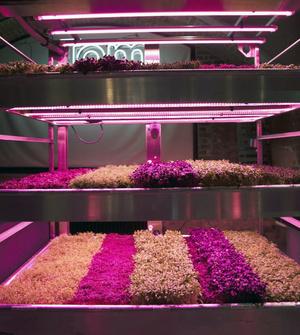 RHS Chelsea Flower Show 2019: сад будущего Тома Диксона и ИКЕА (фото 7.1)