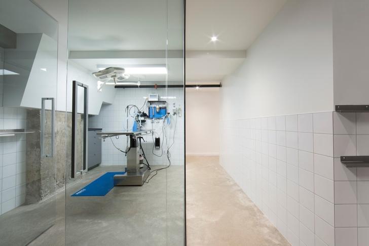 Дай лапу: ветеринарная клиника в Монреале (фото 5)