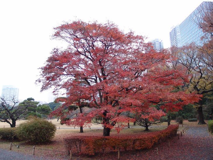 Взгляд инсайдера: Токио (фото 25)